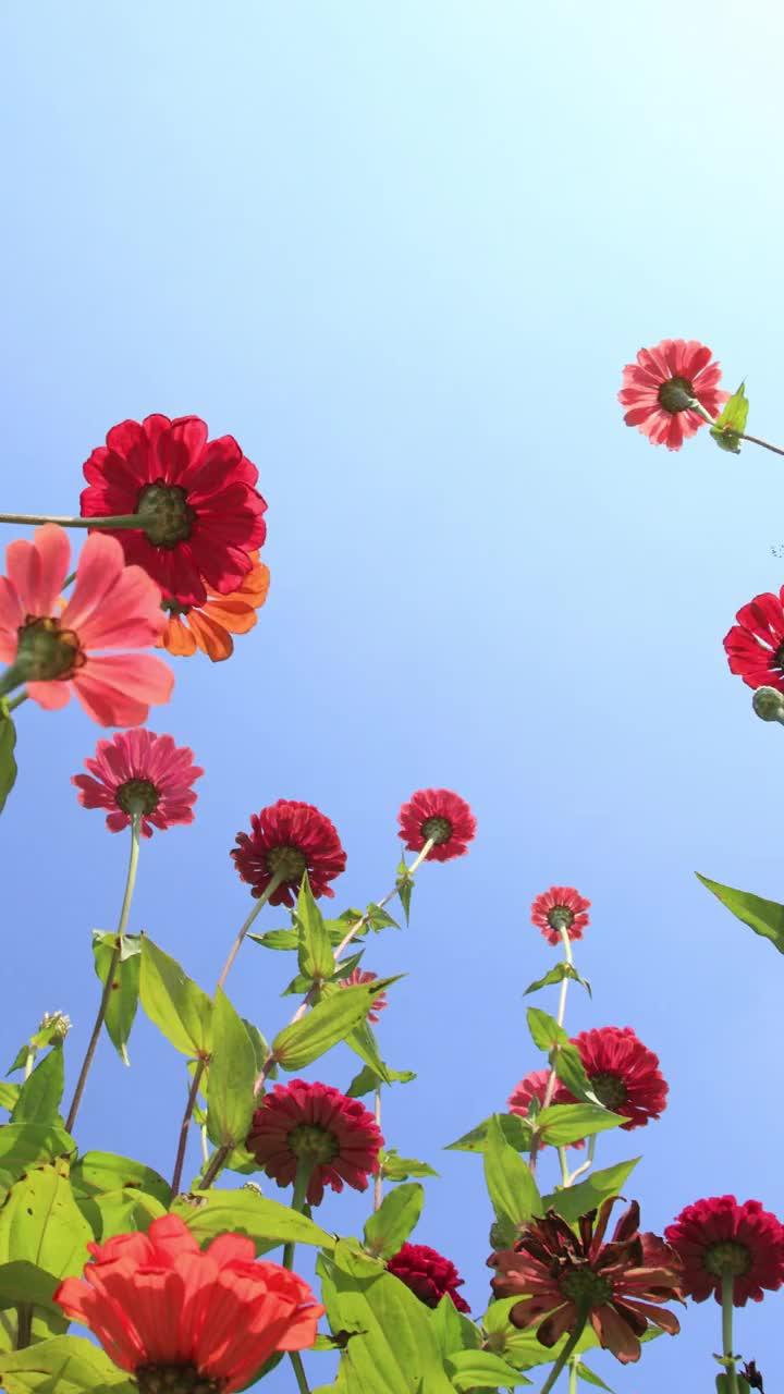 构图也很重要!花卉摄影常见构图方式,你学会了吗?